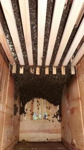 Vývoj včelstva 11.5.2019