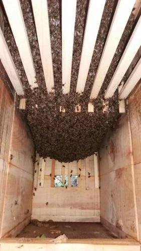 Vývoj včelstva 17.5.2019