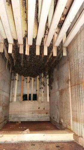 Vývoj včelstva 1.8.2019
