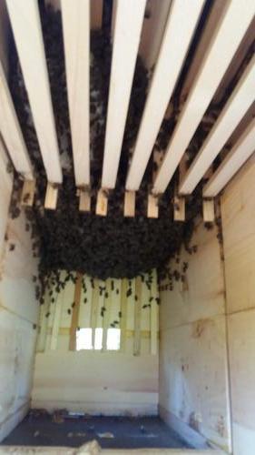 Vývoj včelstva 20.4.2019