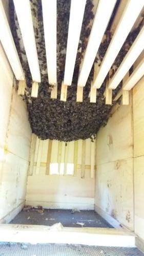 Vývoj včelstva 22.4.2019
