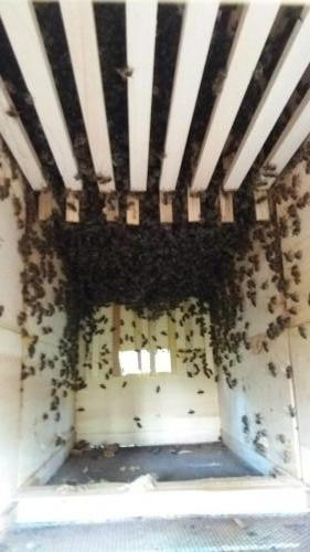 Vývoj včelstva 25.4.2019