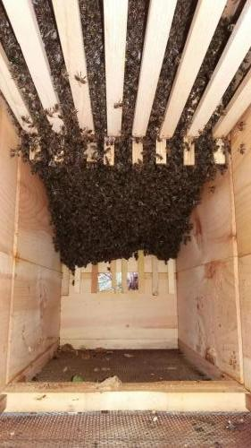 Vývoj včelstva 27.4.2019