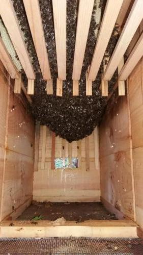 Vývoj včelstva 3.5.2019