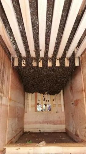 Vývoj včelstva 10.5.2019