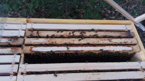 Zahájení chovu ve 2N úlu