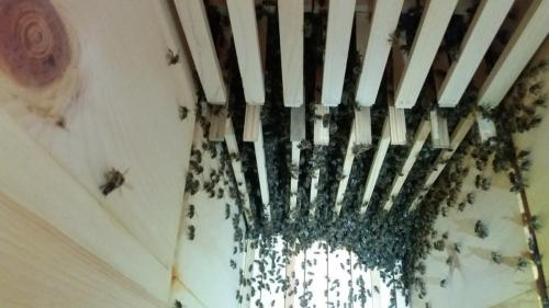 Vývoj včelstva 19.7.2018